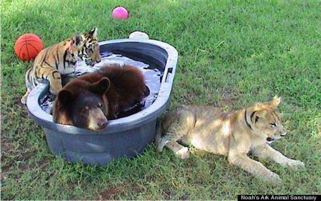 (Noah's Ark Animal Sanctuary)