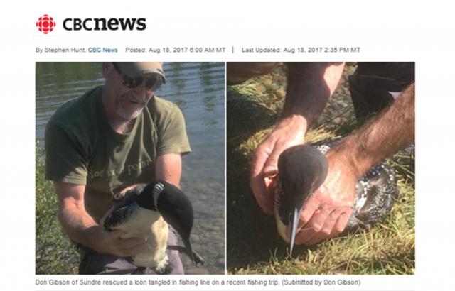 加拿大一位男子在湖邊露營時發現一隻被漁具困住的潛鳥,趕緊替牠拆除身上的魚線。(網路圖片擷圖)