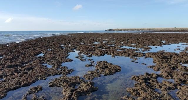 大潭藻礁壯麗景色。(潘忠政/攝影)