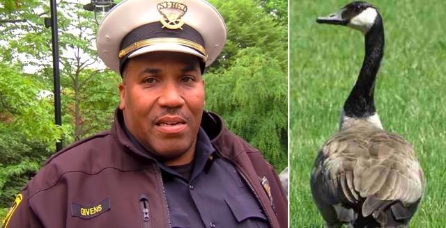 美國警官吉文斯分享,自己遇到一隻野雁媽媽懂得向警方求助解救小雁。(大紀元合成)