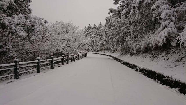 寒流來,太平山自3日凌晨開始降雪,讓太平山成為銀白世界。