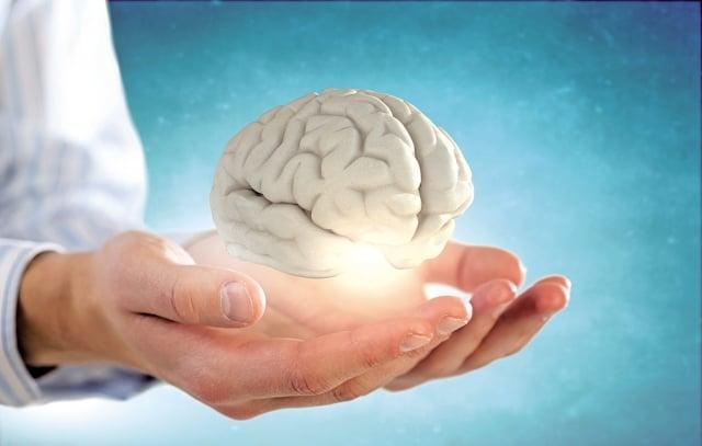 核桃裡含有豐富的大腦所需的抗氧化物、α-亞麻酸、維他命和礦物質,特別是其中的卵磷脂,可以增強記憶力,修復損傷的腦細胞。(Fotolia)