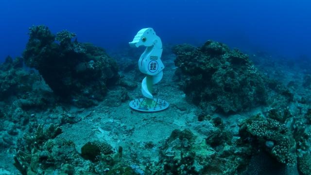 克里蒙氏豆丁海馬十分稀有,為綠島海底地區的代表物種。