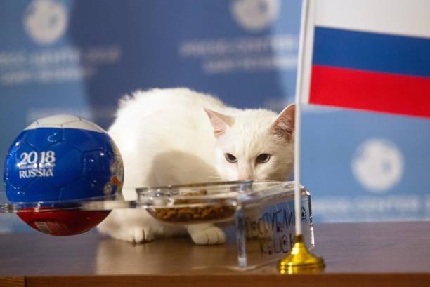 阿基里斯選了插有俄羅斯旗子的貓飼料。(Danila Shostak\TASS via Getty Images)
