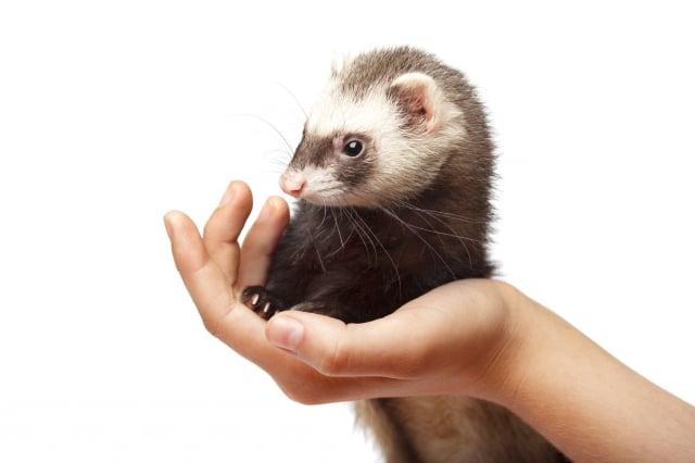 進行野外活動不要觸碰野生動物,狂犬病是會感染所有哺乳類的病毒。(123RF)