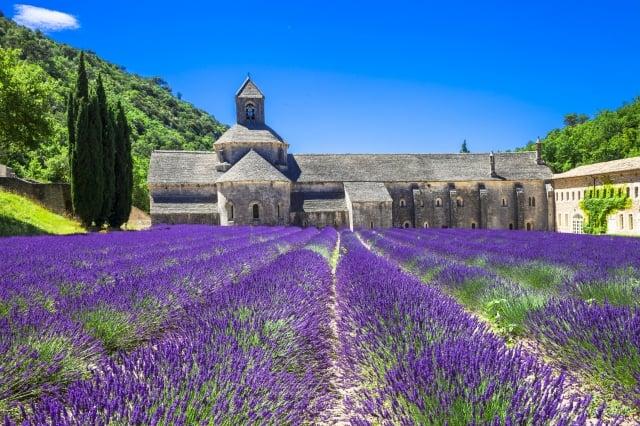 塞南克修道院是觀賞薰衣草的著名場所。 (Fotolia 提供)