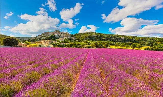 施米雅山城被無邊無際的薰衣草花田環繞。