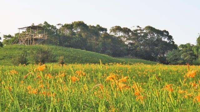 汪家古厝後的瞭望台,視野遼闊可以遠眺山景與金針花海。