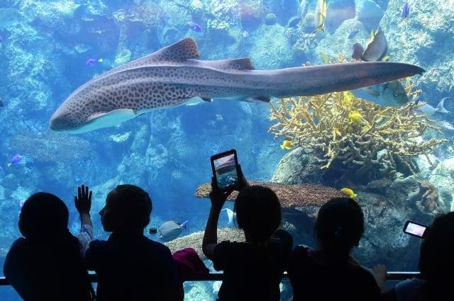 在中共發出旅行禁令之前,中國遊客占帛琉遊客的一半。圖為帛琉。(FREDERIC J. BROWN/AFP/Getty Images)