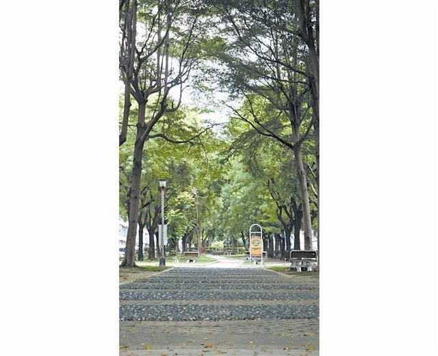「櫻花孩子王」步行可到忠明、工學北路相交的T字綠園道。距離中興大學康橋也不遠。(謝平平)