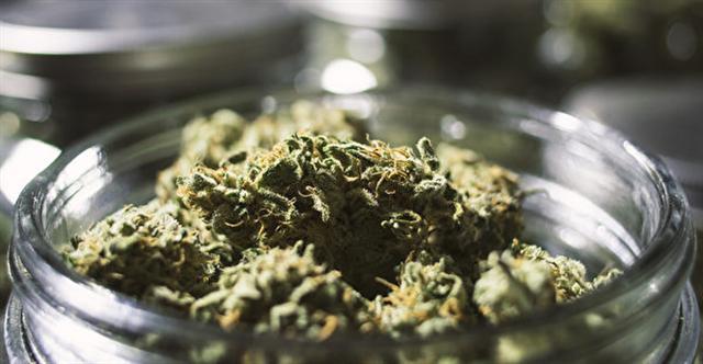 大麻。(OpenRangeStock/iStock)