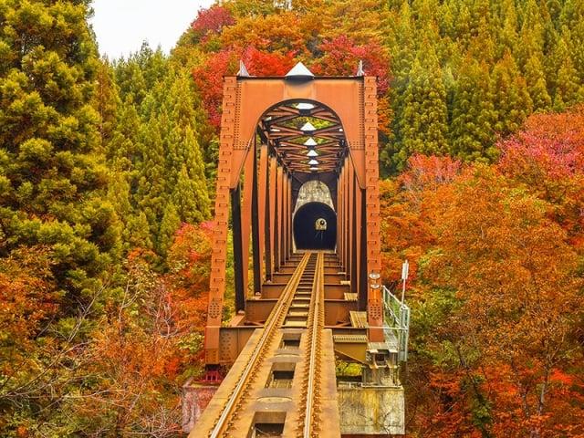 「秋田內陸縱貫鐵道」是日本東北著名的賞楓鐵道(易遊網提供)