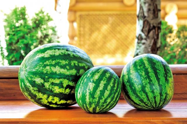 西瓜被挑選並儲存在室溫後,對人體有益的「番茄紅素」水平增加了40%,「β- 胡蘿蔔素」上升了近140%。(Fotolia)