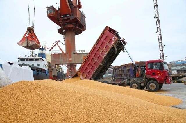 近日,兩艘裝滿美國大豆的貨輪起航前往中國,該跡象表明即使美中爆發貿易戰,中國買家仍需要美國大豆。(AFP/Getty Images)