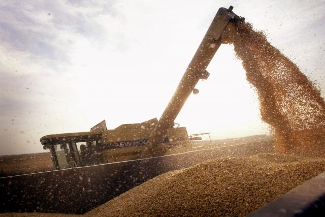 因中共對美國大豆徵收報復性關稅,導致中國進口美國大豆數量驟減。最新跡象顯示,美國對東南亞等地區的大豆出口量增加了90%,表明中國買家可能已經找到繞道進口美國大豆的方法。(Scott Olson/Getty Images)