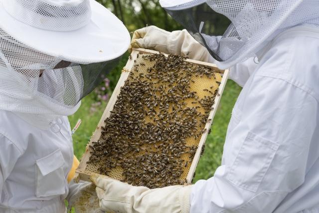 在澳洲養蜂可以有諸多理由。(pixabay)