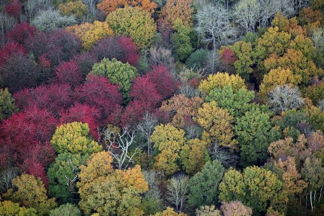 韋斯頓柏植物園秋樹色彩繽紛。 (Getty Images、Fotolia )