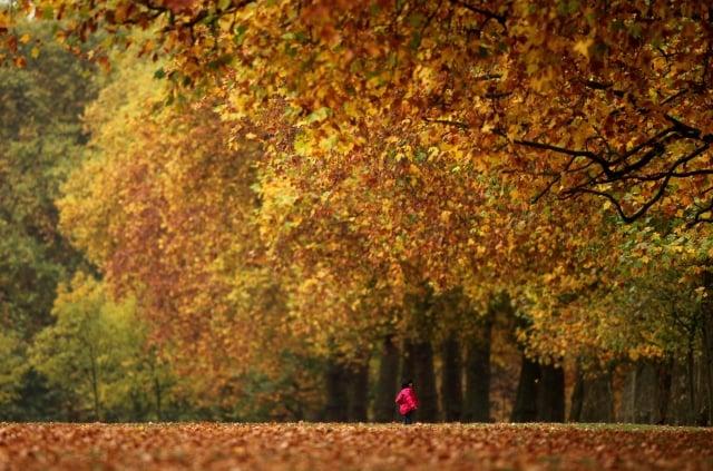 海德公園秋景令人陶醉。 (Getty Images、Fotolia )