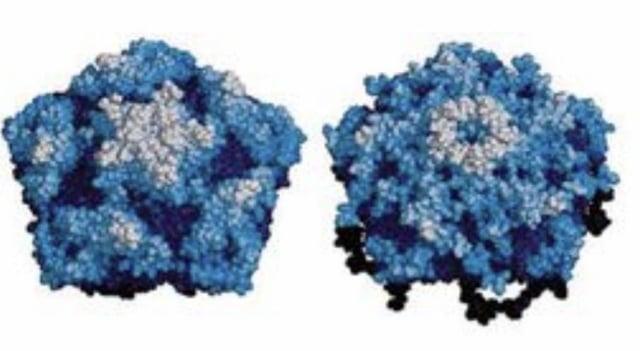 皓悅生技研究團隊從大自然採集到各種病毒植株後,做分子生物研究,篩出針對紅火蟻的專一性病毒,複製成紅火蟻病毒顆粒。