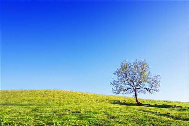 榕樹說:「自由來自於溫飽。而你卻嚮往自由的假相?」(Fotolia)
