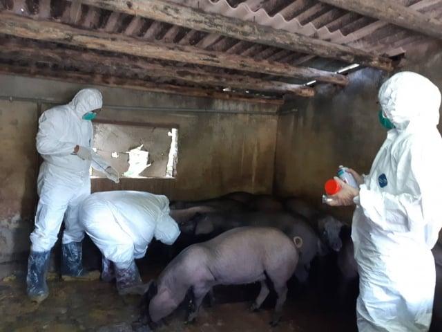 加強養豬場消毒(竹市府提供)