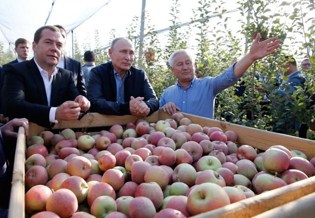 俄羅斯政府開始著手全力扶持本國的農業發展。圖:2018年10月9日,俄羅斯總統普京(中)和總理梅德韋傑夫(左)參觀 Stavropol 郊外 Rassvet 農業公司的蘋果園。(Dmitry Astakhov / AFP / getty Images)
