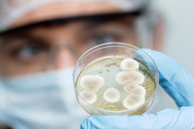 科學家培養微生物。(ShutterStock)