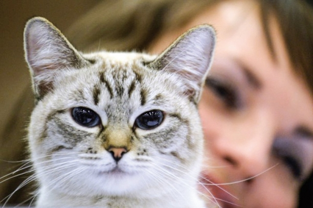 Queena一年多前失去了她的愛貓「比比」。她在比比臨終時叮囑對方,來世要它當自己的孩子,並約定以紅色胎記作為相認記號。圖為示意圖。(VASILY MAXIMOV/AFP)
