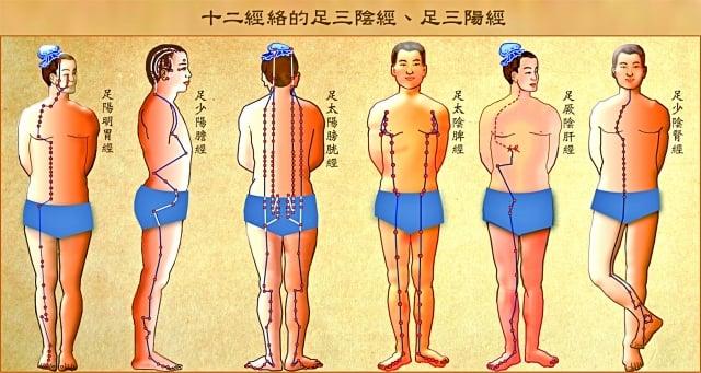 十二經絡中的足三陽經(胃、膽、膀胱)和足三陰經(脾、肝、腎 )。(Fotolia)