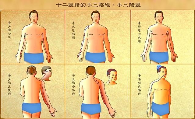 十二經絡中的手三陰經(心、肺、心包)和手三陽經(三焦、小腸、大腸)。(Fotolia)