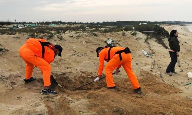 工作人員現場實施採樣後,已將鯨豚屍體就地掩埋。