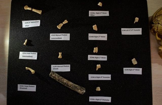 菲律賓呂宋島的卡勞洞穴發現新的古人類物種「呂宋古人類」被認為身高不足1.2公尺。圖為研究人員展示發現的骨骼和牙齒。(NOEL CELIS/AFP/Getty Images)