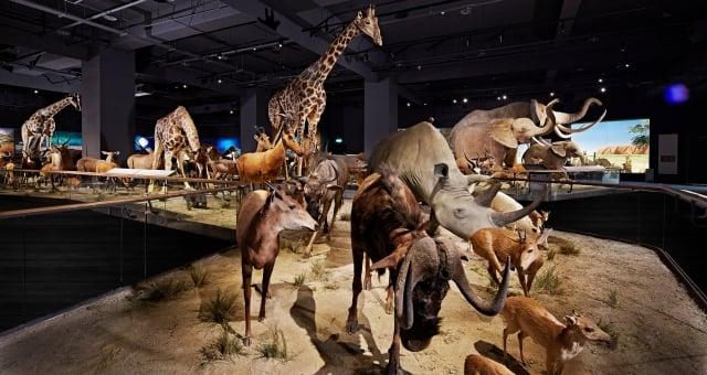 深受小朋友喜愛的奇美博物館「動物廳」(奇美博物館提供)