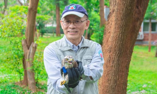 掛網的灰面鵟鷹4月30日重返大自然。(金門國家公園管理處提供)
