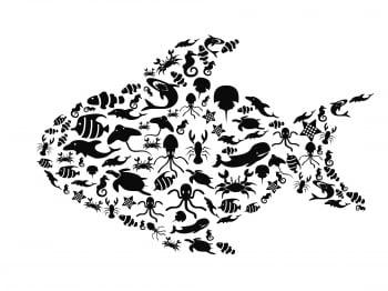 【啟思寓言】當旗魚遇到鱟魚