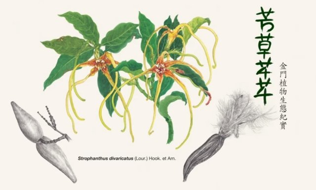 金門植物生態紀實影片《芳草芊芊》5月21日首映。(金門國家公園管理處提供)
