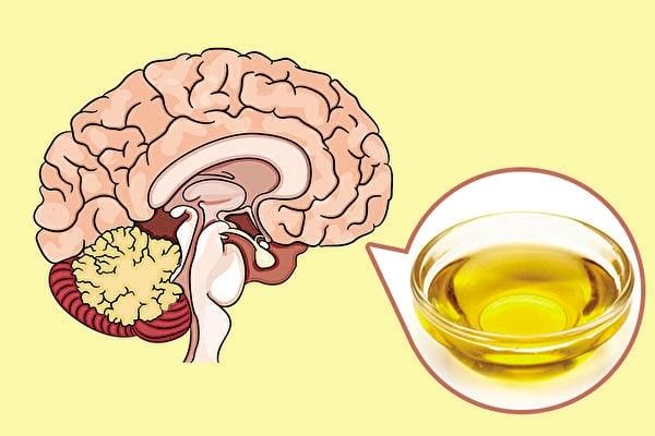 選擇健康的食用油、盡量避開手機等現代電子器具的微波,是最好的健腦法, 方法簡單且無須擔心藥物副作用。(Shutterstock)