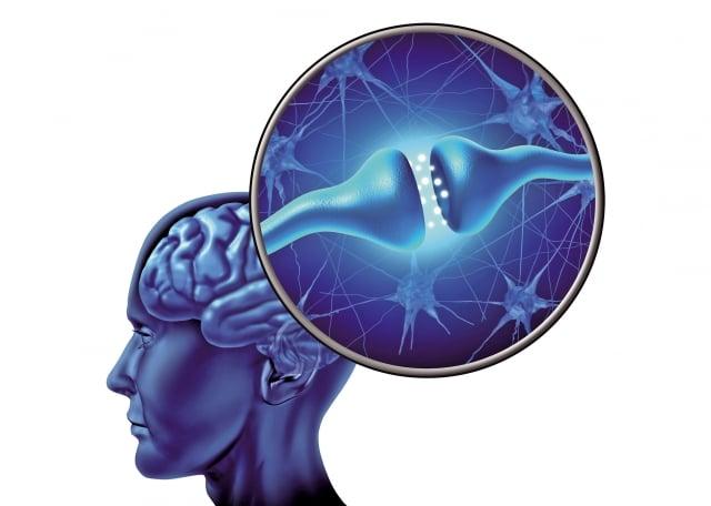 維護大腦健康、預防失智,就需要維護神經細胞的健康。(Fotolia)