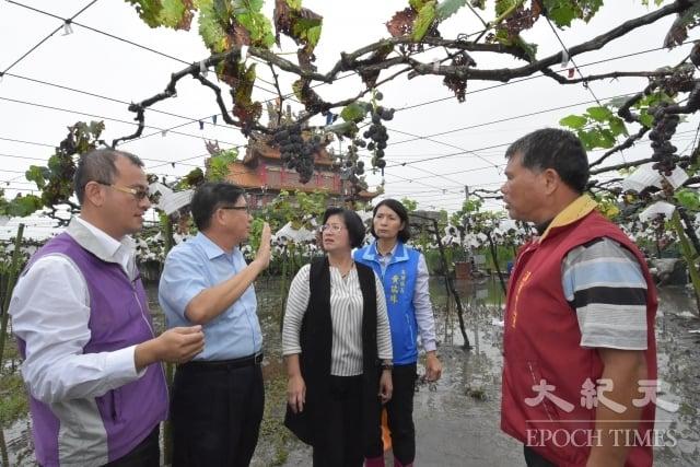 彰化縣長王惠美(左3)視察溪湖葡萄災損情況。(記者謝五男/攝影)