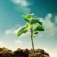 一株小小的樟樹,天地間就會來成長它;在內心中,許下了一個小小的願望,全世界也會來成就它。(shutterstock)