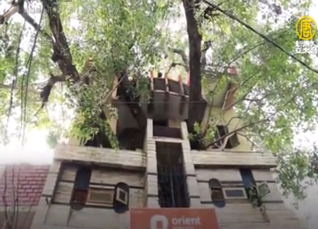 為了保存百年老樹,印度一家人決定將房子圍繞老樹建造。(新唐人電視台)