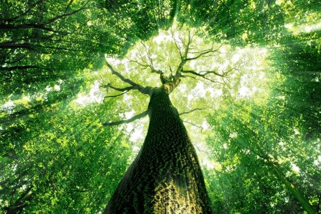 就樹木而言,雖然生命的長短不一,有的數千年,有的不過數載,但是終歸是要消殞的,在每個不同的生命中,只有能夠真正的肯定自己,才能做自己的主人;也只有能夠心存感恩,才能讓自己知足而常樂,不是這樣子嗎?(123RF)