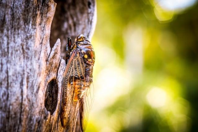 想起〈秋水篇〉的這句話來:「夏蟲不可以語於冰者,篤於時也」,然後就會讚歎起莊子的形容真是貼切。(123RF)