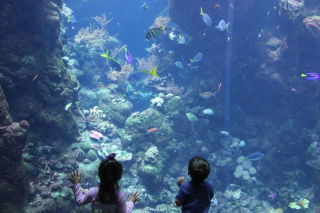 業者表示,夏季奪下冠軍的旅遊勝地,以寓教於樂的水族館為熱門首選。圖為示意圖。(記者丘石/攝影)