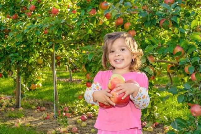 採摘果樹上的水果,是最新鮮的享受。(Fotolia)