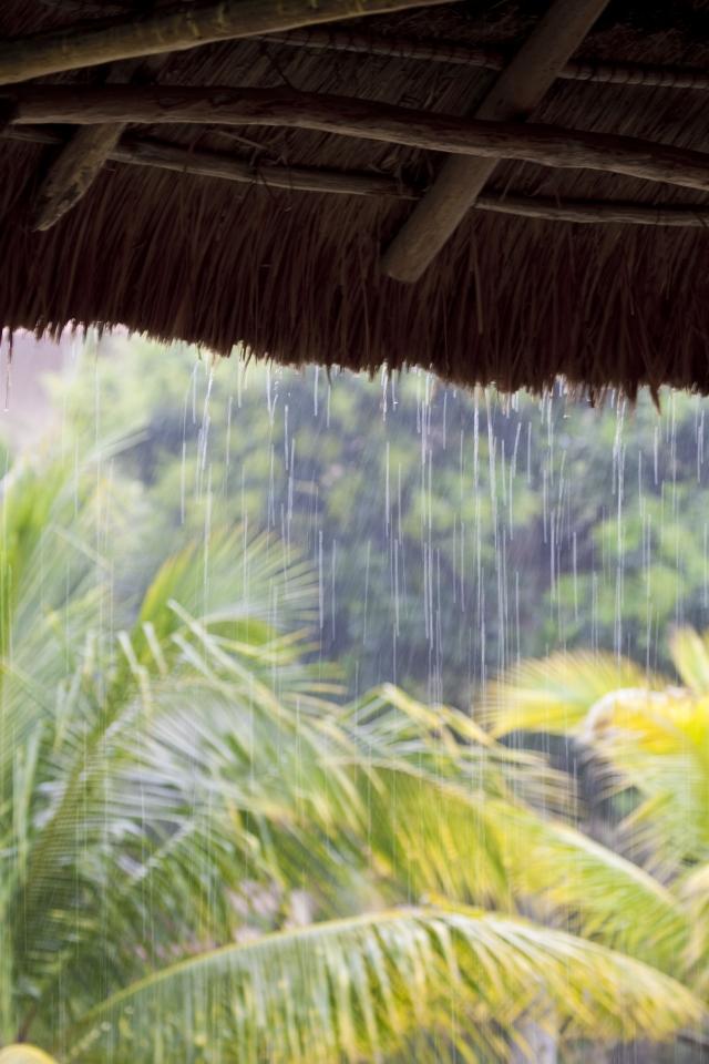 雨不識寂寞也叮叮咚咚,敲起了芭蕉惆悵,葉低垂無語。(123RF)