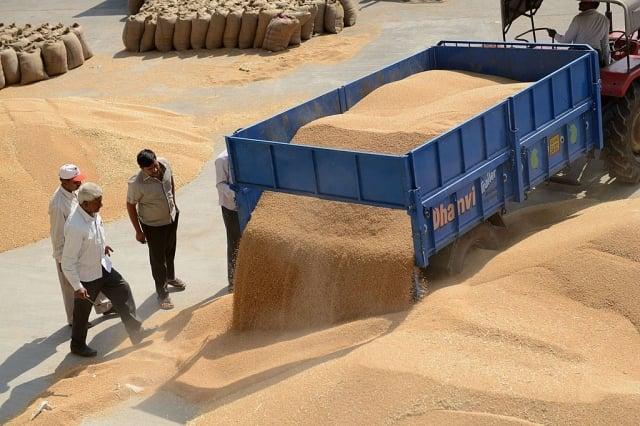 印度農會7月31日警告政府,不要加入「區域全面經濟合作夥伴關係」(RCEP)貿易協定。圖為印度小麥。(AFP/Getty Image)