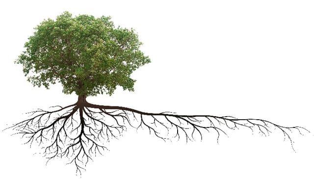 小漁村的國小裡,生長了兩棵樹。(123RF)