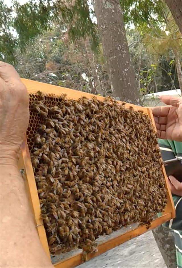正純食品的蜂蜜每一滴萃取,都是經過辛苦的採集而來的。(正純食品提供)