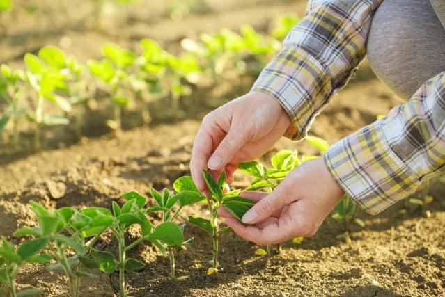 開心農場,最怕蟲與忙,但更怕的是沒有心的人,只要有心,任何植物都可以種成,只要有心,遭遇到困難也可以迎刃而解,種得開心,也吃得相當開心。(123RF)